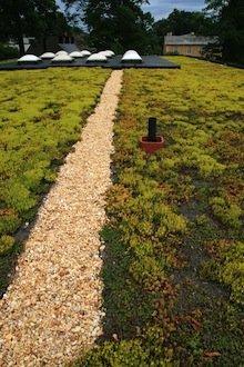 green_roofing-sized.jpg.jpe