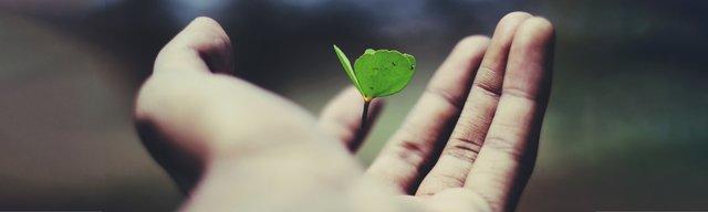 hand-flower.jpg